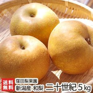 新潟産 窪田梨果園の日本梨 二十世紀 5kg(10〜14玉)/ギフト プレゼント お祝い 贈り物 のし無料 送料無料|niigata-shop
