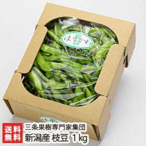 新潟産 枝豆 1kg 三条果樹専門家集団/送料無料|niigata-shop