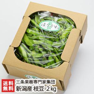 新潟産 枝豆 2kg 三条果樹専門家集団/送料無料|niigata-shop