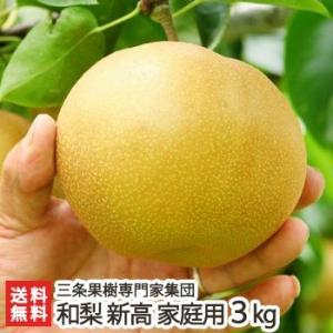 新潟産 日本梨 家庭用 新高 3kg(4〜6玉)三条果樹専門家集団/送料無料 niigata-shop