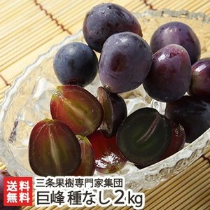 巨峰 種なし 2kg(4〜7房)三条果樹専門家集団/お歳暮に!/のし無料/送料無料|niigata-shop