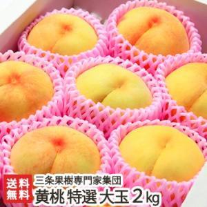 新潟産 黄桃 特選 大玉2kg(5〜7玉)三条果樹専門家集団/のし無料/送料無料 niigata-shop