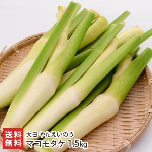新潟産マコモタケ 1.5kg/矢田営農組合/送料無料|niigata-shop