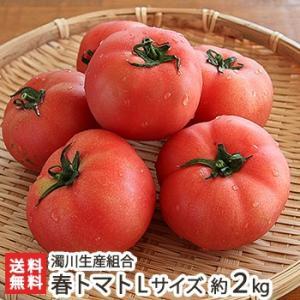 新潟産「にごりかわトマト」春ト...