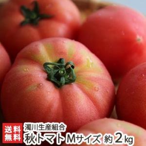 新潟産「にごりかわトマト」秋トマト Mサイズ 約2kg(12玉)濁川生産組合/のし無料/送料無料|niigata-shop