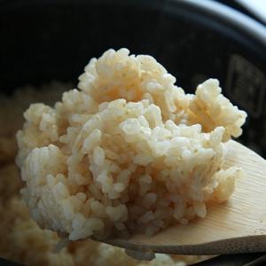 令和元年度新米 新潟産コシヒカリ(従来品種)玄米「発芽元気」1kg(無農薬・無化学肥料)/のし無料/送料無料|niigata-shop|04