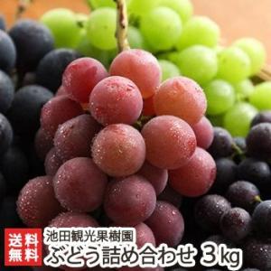 新潟産 ぶどう詰め合わせ 3kg(6〜9房※巨峰もしくはピオーネは必ず入ります)池田観光果樹園/送料無料|niigata-shop