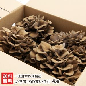 新潟県産 一正のまいたけ 4株(1株400g)一正蒲鉾株式会社/のし無料/送料無料|niigata-shop