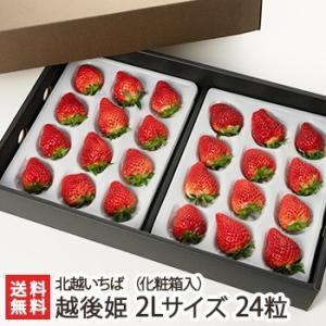 越後姫 2Lサイズ 24粒(化粧箱入り) 北越いちば/新潟産ブランド苺/のし(熨斗)無料/送料無料|niigata-shop