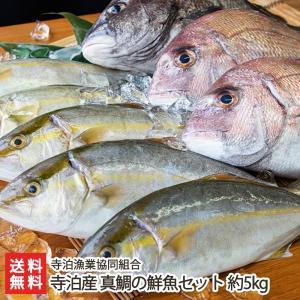 寺泊産 真鯛の鮮魚セット 約5kg 寺泊漁業協同組合/料無料|niigata-shop