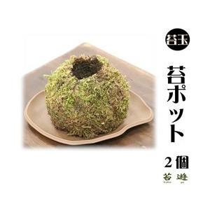 苔玉用 苔ポッド 2個 送料込み!|niigata025