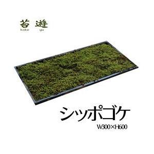 こけマット シッポゴケ 苔マット 苔遊 |niigata025