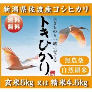 トキひかり1|niigata025