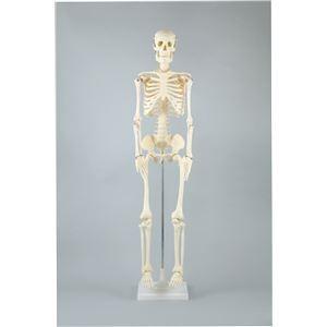 アーテック 人体骨格模型 85cm nijiiromarket