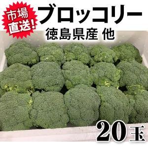 ブロッコリー 15玉 長野県産 【生活習慣病をブロック!】