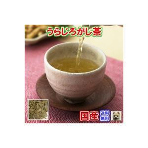 健康茶「国産」ウラジロガシ茶 チャック付新鮮真空パック100...
