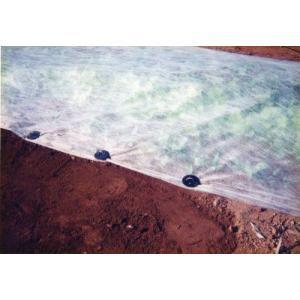 黒丸君 4穴 20cm 200組 (シート押さえに)|nikkoseed2012|02