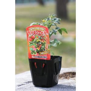 ドワーフトマトとは草丈が非常に低い(矮性)のタイプのミニトマトです。 手軽にコンパクトに育てられるの...