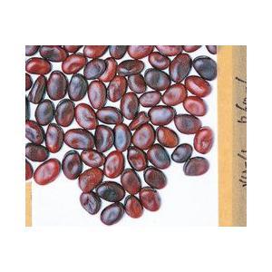 青莢で赤い実の蚕豆。作りやすくて豊産種。古くからある在来の早生種ですが、グルメ時代に見直されて、人気...