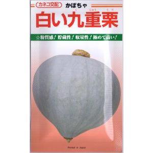 果実は2.0〜2.5kg前後の大きさで、揃いが良いです。果形はやや尻がとがる甲高の偏円形です。果皮は...
