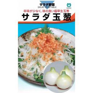 丸種 タマネギ サラダ玉葱 1.6ml