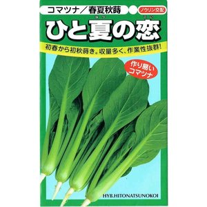 鮮やかなテリの濃緑ののべ葉で、夏場の高温乾燥下でもカッピングしにくく栽培が容易。極濃緑の軸は上まで太...
