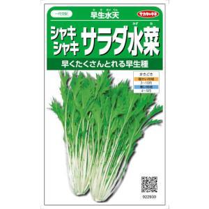 生長が早くてそろいもよく、つくりやすいミズナです。低温期でもよく生長します。栄養分も豊富で、シャキシ...