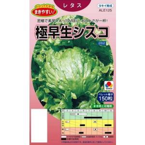 耐暑性にすぐれた、栽培容易な極早生種。結球性にすぐれ、高温干ばつ時でも結球は良好。食味はジューシーで...
