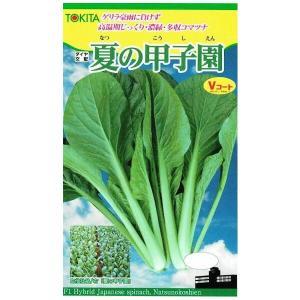 葉身、葉柄とも極濃緑カッピング少なく、平滑で高品質バランスが良く、荷姿も作業性も良い在圃性棚持ち良好...