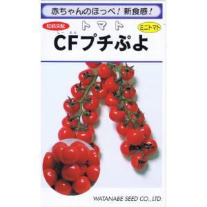渡辺採種場 ミニトマト CFプチぷよ コート種子 約10粒