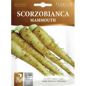 サルシファイ(西洋ごぼう)(Mammouth)は香りが牡蠣に似ていることからオイスタープラントと呼ば...