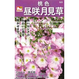 日本で野生している月見草と同じ仲間ですが、この種類は昼に咲く一日花です。美しい桃色の花は花だん植えに...