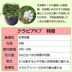 クラピアk7(白花) 9cmポット苗 24本セット(有機肥料・有機石灰付き)|nikkoseed2012|06