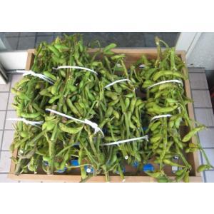 丹波篠山 黒豆枝豆(枝付・2kg)