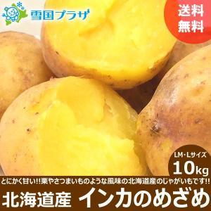 じゃがいも 北海道 インカのめざめ 10kg ジャガイモ 新じゃが お取り寄せ 目覚め