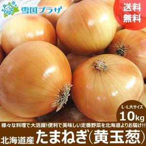 たまねぎ 北海道  黄玉葱 10kg 新玉ねぎ タマネギ 玉葱 お取り寄せ 産直