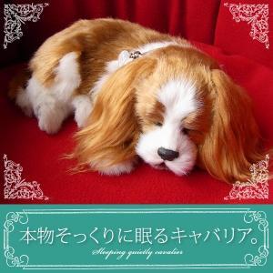 犬 ぬいぐるみ リアル 本物そっくりに眠るぬいぐるみ パーフェクトペット キャバリア
