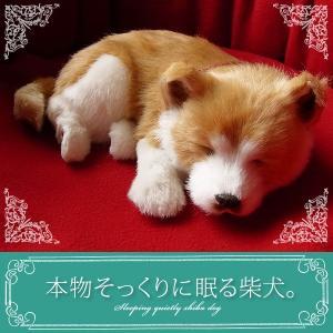 ぬいぐるみ 犬 リアル|本物そっくりに眠る柴犬|クリスマス プレゼント 誕生日
