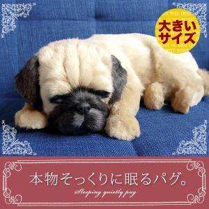 犬 ぬいぐるみ リアル 本物そっくりに眠るぬいぐるみ パーフェクトペット(大) パグ