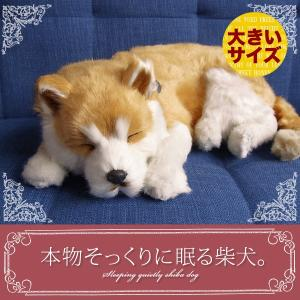 本物そっくりに眠るぬいぐるみ|パーフェクトペット|柴犬(大)|クリスマス プレゼント 誕生日