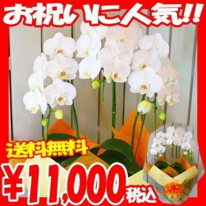 お祝の花ギフトに人気の胡蝶蘭 各種お祝いにお使いいただけます。 胡蝶蘭 ギフトは各種お祝い、開店祝い...