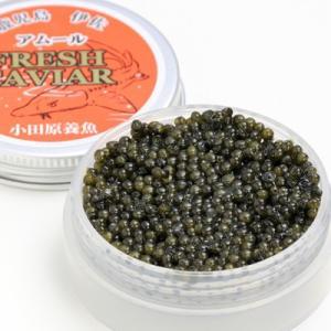 濃厚でクリーミーな味わい 国内養殖数の少ない希少種を使用したフレッシュキャビア(アムール) 送料無料|nipponselect|02