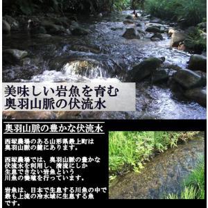 岩魚 50匹 nishiduka-farm 02