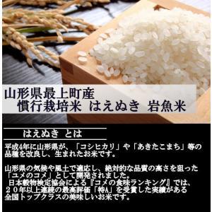 【新米】慣行栽培米はえぬき岩魚米 (令和2年産)白米 5kg|nishiduka-farm|02