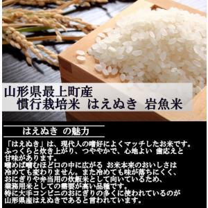 【新米】慣行栽培米はえぬき岩魚米 (令和2年産)白米 5kg|nishiduka-farm|03