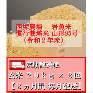 【定期配送便】慣行栽培米 山形95号 岩魚米 (令和2年産)玄米 20kg× 3回|nishiduka-farm