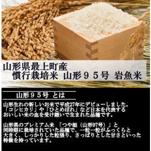 慣行栽培米 山形95号 岩魚米 (令和元年産)白米 20kg nishiduka-farm 02