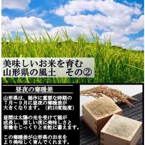 慣行栽培米 山形95号 岩魚米 (令和元年産)白米 20kg nishiduka-farm 05