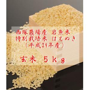 【新米】特別栽培米はえぬき岩魚米 (平成29年産)玄米 5kg|nishidukafarm