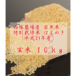 【新米】特別栽培米はえぬき岩魚米 (平成29年産)玄米 10kg nishidukafarm